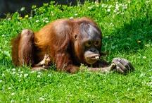Dublin Zoo / Lovely animals from Dublin Zoo