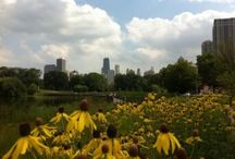 My Kind of Town, Chicago / by Erin Skibinski