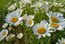 Photo fiori e Pensieri