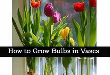 Easy Gardening!!!! / by Donna Pudney
