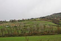 Mastroberardino / Oggi andiamo in Campania a visitare la famiglia Mastroberardino, che dalla metà del Settecento coltiva nel villaggio di Atripalda vitigni autoctoni con un'attenzione tutta particolare alla tradizione e alla storia. #WineLovers