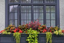 flowerboxes