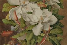 Treasures from the Oak Spring Library: Botanical Art / Take a peek at some of the masterpieces in Oak Spring Library's extraordinary botanical art collection.