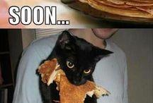 it's a cat's world / Hear me roar! meow!
