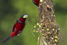 Asia: Native birds