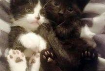 Kittens / Soooo cute