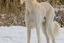 Hondenrassen