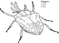 Kleuter insecten. / Thema insecten voor kleuters.