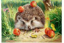 JEŽKO - Hedgehog