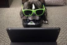 Office Dogs / We're big fans of bringing our best friends to work. Talk about adorable!