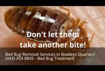 Bed Bug Removal Services in Bowleys Quarters MD (443) 354-8805 - Bed Bug Treatment