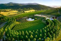 The Yarra Valley, Victoria, Australia / I live at the gateway to the Yarra Valley - about 40 kms east of Melbourne, Australia. It's a gorgeous part of the world and full of great wineries. Enjoy the scenery. :)