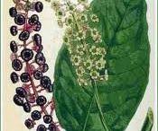 gyógynövények,házipraktikák