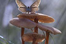 Lepke (Butterfly)