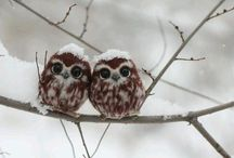 Owl / Owl anything