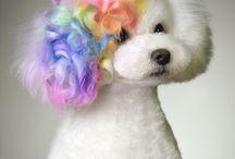 Kreatív kutyakozmetika