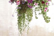Hanging Arrangements / by FLOWERS ON ORCHARD LANE