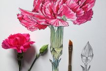 natural illustration