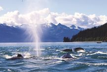 Cruise Alaska / by Cruiseabout South Africa
