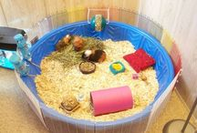 Best DIY Guinea Pig Cages / Great Ideas to jump start your creativity in order to build your own stylish guinea pig cage.