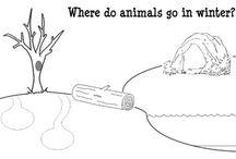 hibernation animals