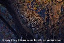 South Africa - Wildlife / by Kunzum #wetravel