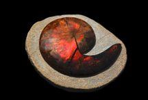 Fossielen - Fossils / Onze collectie bestaat uit enorm veel verschillende soorten fossielen.  st1 gallery - objects by nature