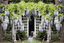 Gardening Ideas & Inspiration
