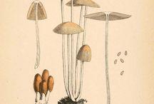 Vintage botanical and zoological illustrations