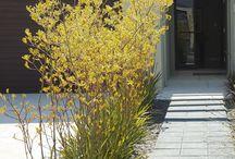 Front garden/verge