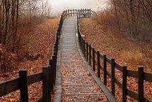 Halloween, autumn - fall
