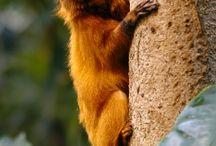 Rainforests / Ideas for Integrated Senior Unit