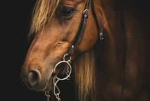 Equine Art & Photography / Some of the most beautiful equestrian photos and art pieces we find.