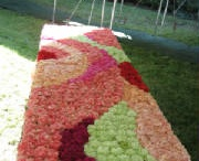 Carnations ...so Misunderstood / by Toni Chandler Flowers & Events