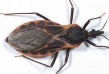 insetti pericolosi