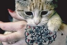 koty i tatuasze