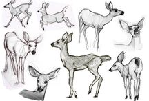 animals illustration