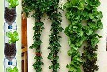 Horta na varanda