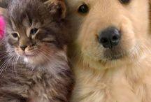 Dogs and Cats / Pisici şi câini de toate felurile.