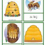 Thema: bijen