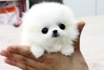 Animals cute ones small ones and ones just simply funny / Here I will post cute baby animals weird animals and interesting animals and oh also unique animals