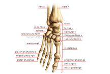 Anatomy / by Kathy Robinson