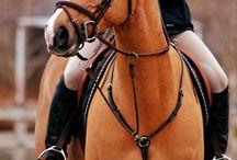 Horses, ridning & style