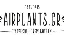 Airplants.gr / Η εταιρεία airplants.gr αποτελεί μια νέα δραστηριότητα της Φυταγοράς Σερρών πάνω στα αερόφυτα.