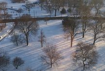 Lincoln Park / Chicago's Lincoln Par Neighborhood