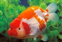 Fish rg