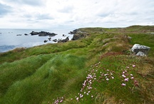 Local area - beautiful West Cork