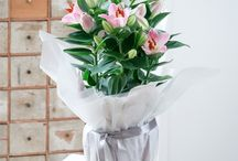 All About Lilyplant Gifts
