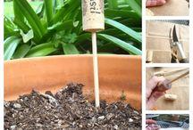 Bylinky/Herbs