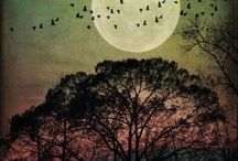 La Lune / I love the night sky too much to be afraid of the dark...